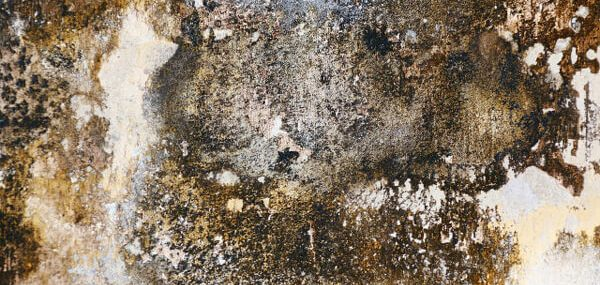 Advice on mold when buying or selling a home.