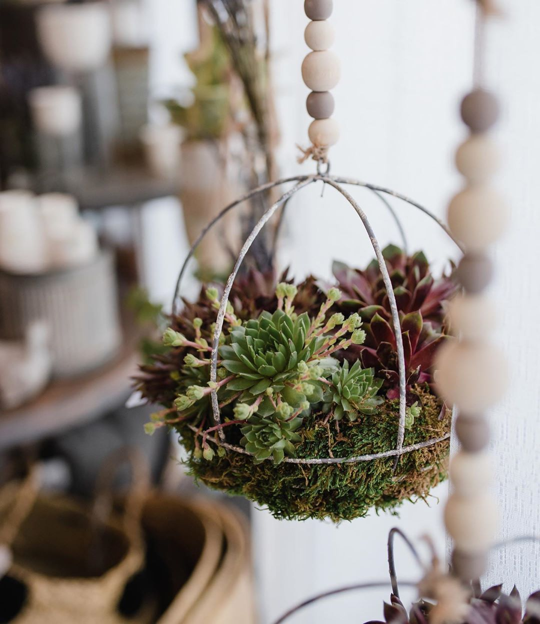 Hanging Basket Garden? Learn How to Make a Hanging Garden
