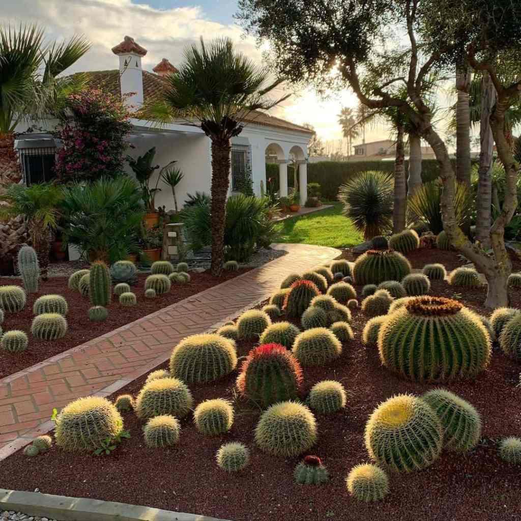 Cactus Decor & Landscaping Ideas