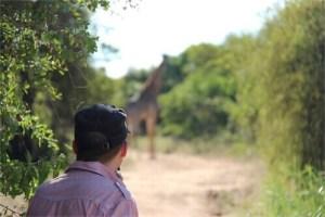 Safari-Giraffe-Zuid-Afrika