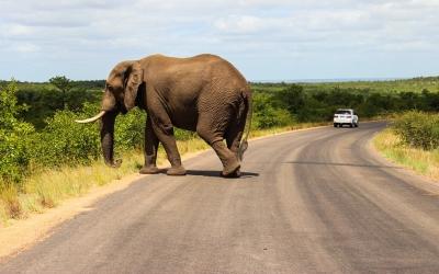 olifant-vakantie-zuid-afrika