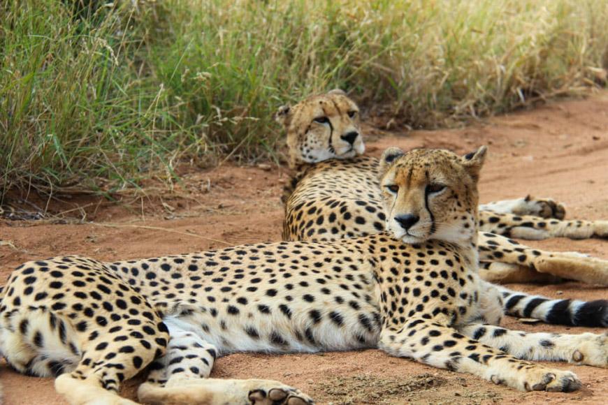 Cheetah Project