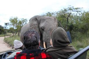 Olifant tijdens een Game Drive Zuid-Afrika