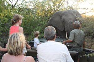 Safari met kinderen Zuid-Afrika