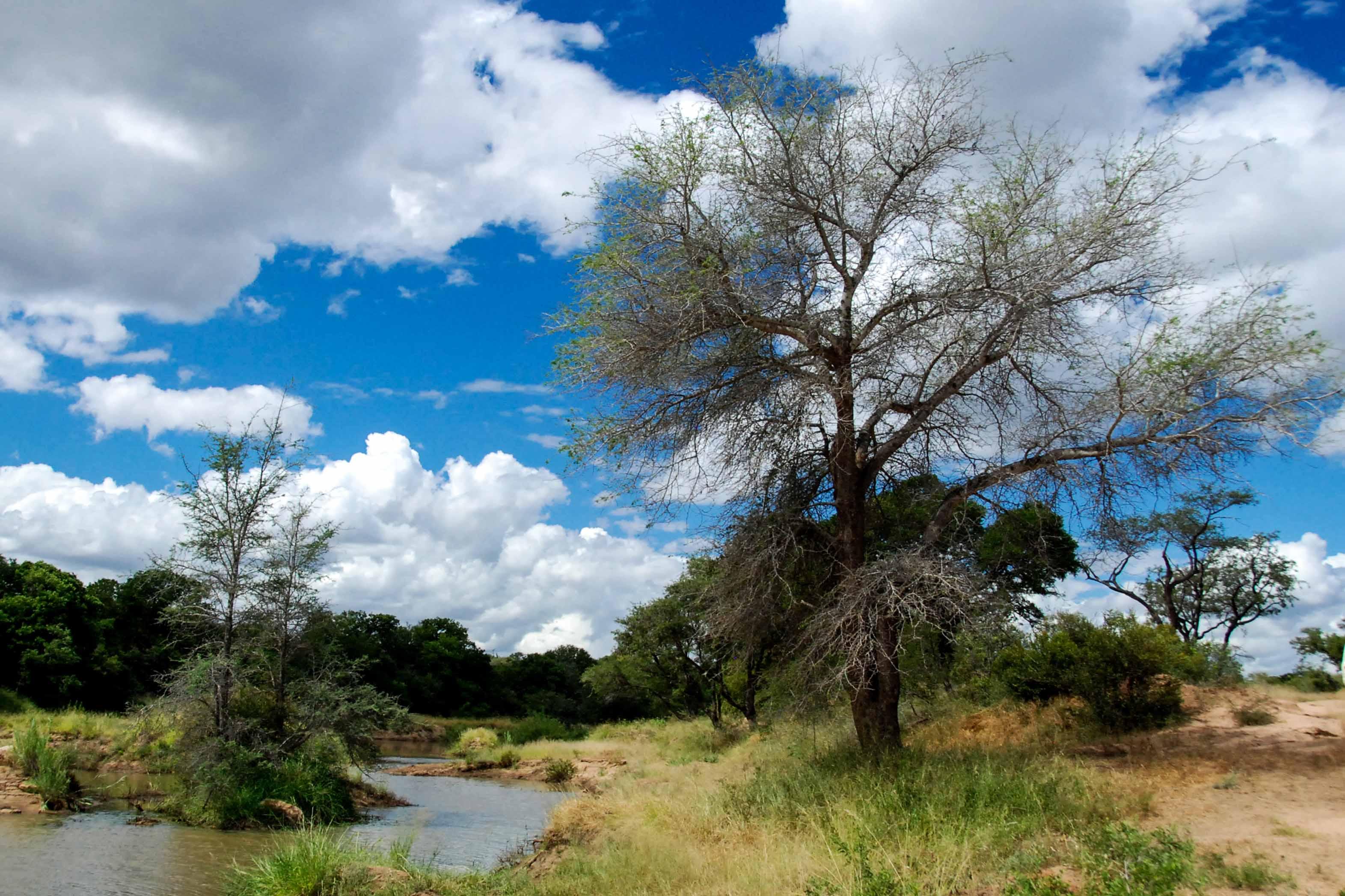 klimaat \u0026 weer in zuid afrika \u0026 krugerpark hele jaar aangenaam?weer en klimaat in hoedspruit zuid afrika