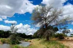 Weer en klimaat in Hoedspruit Zuid-Afrika
