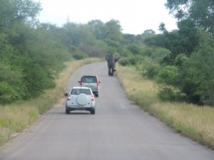 Elephant in the Kruger Park