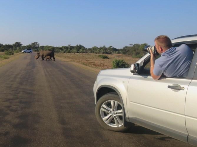 Neushoorns - Safari - krugerpark