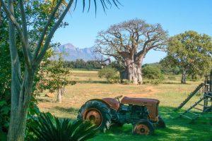 Giant Baobab - Zuid Afrika