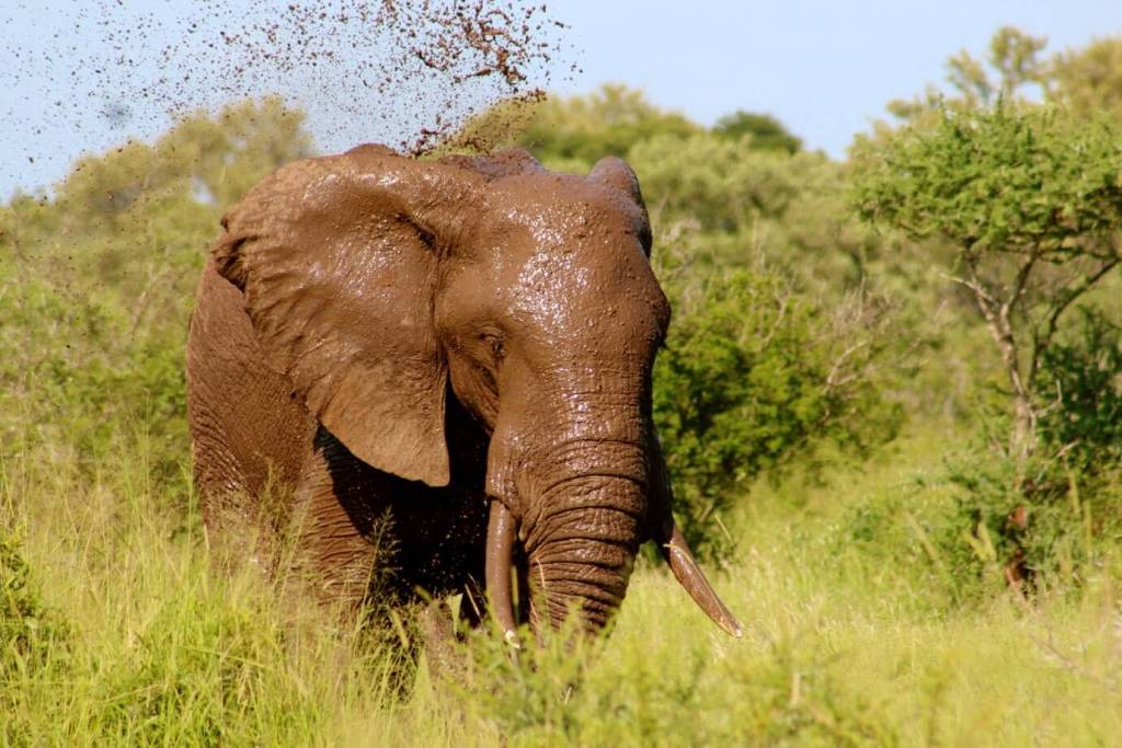 Elephant Kruger National Park