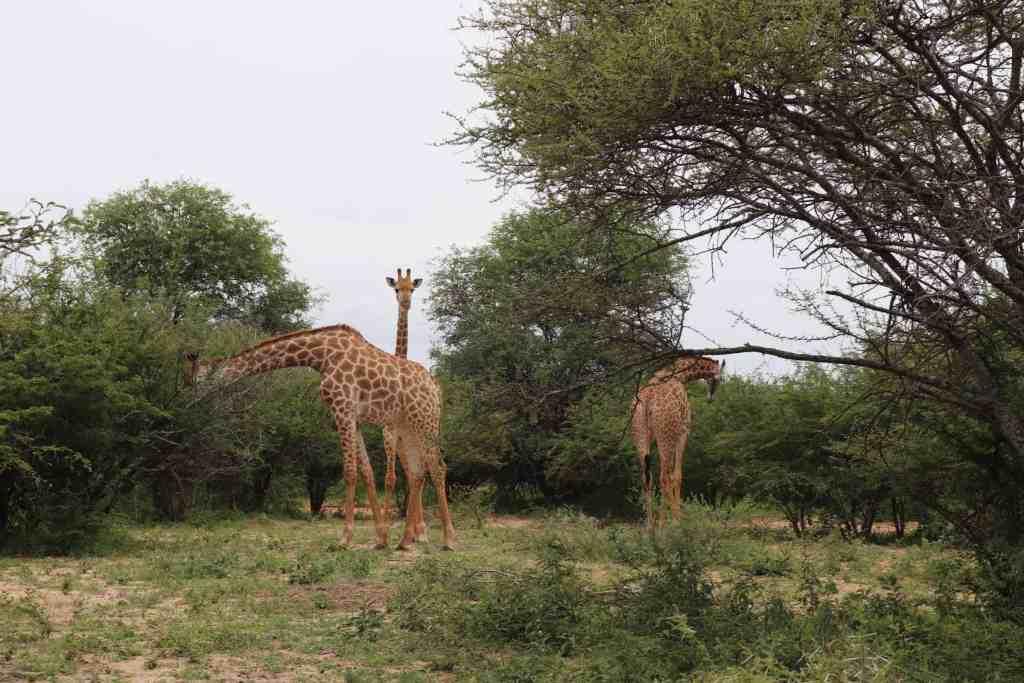 Reisverslag vakantie Zuid Afrika5