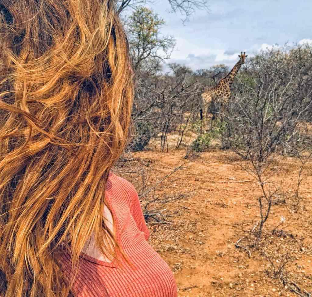 Giraffe - in Zuid Afrika