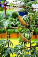 11 affordable backyard vegetable garden design ideas