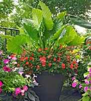 12 fabulous summer container garden flowers ideas