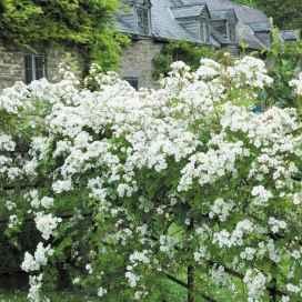 32 beautiful cottage garden ideas to create perfect spot