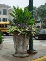 33 fabulous summer container garden flowers ideas