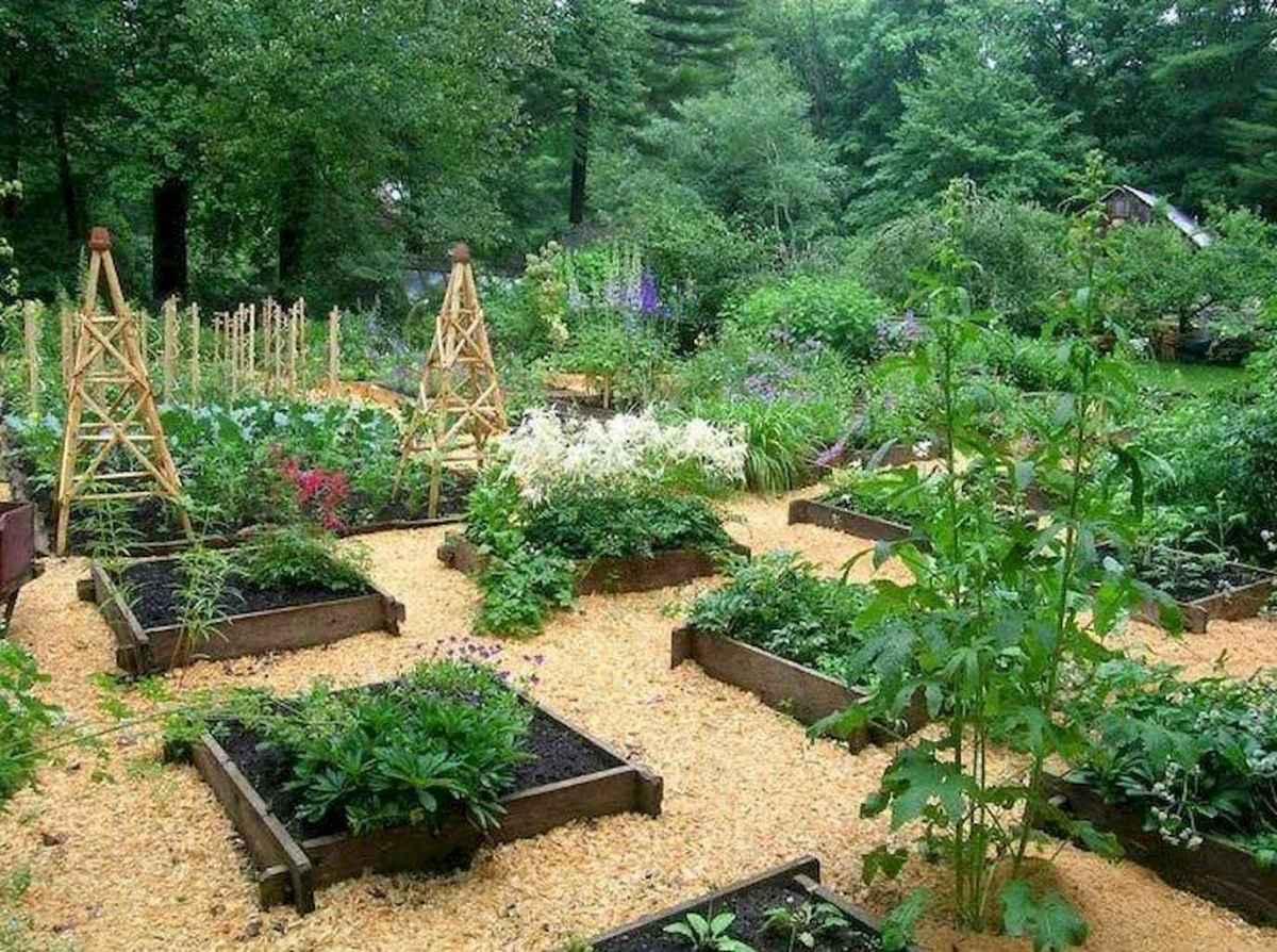47 Affordable Backyard Vegetable Garden Design Ideas Homespecially
