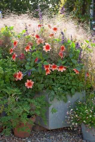 59 fabulous summer container garden flowers ideas