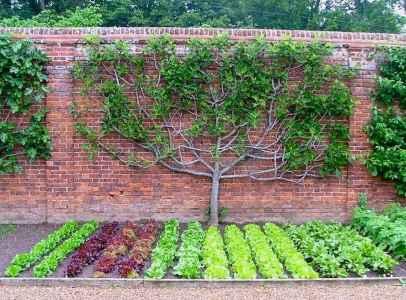64 affordable backyard vegetable garden design ideas
