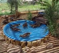 Backyard Duck Habitat | How To Build A Duck Deck ...