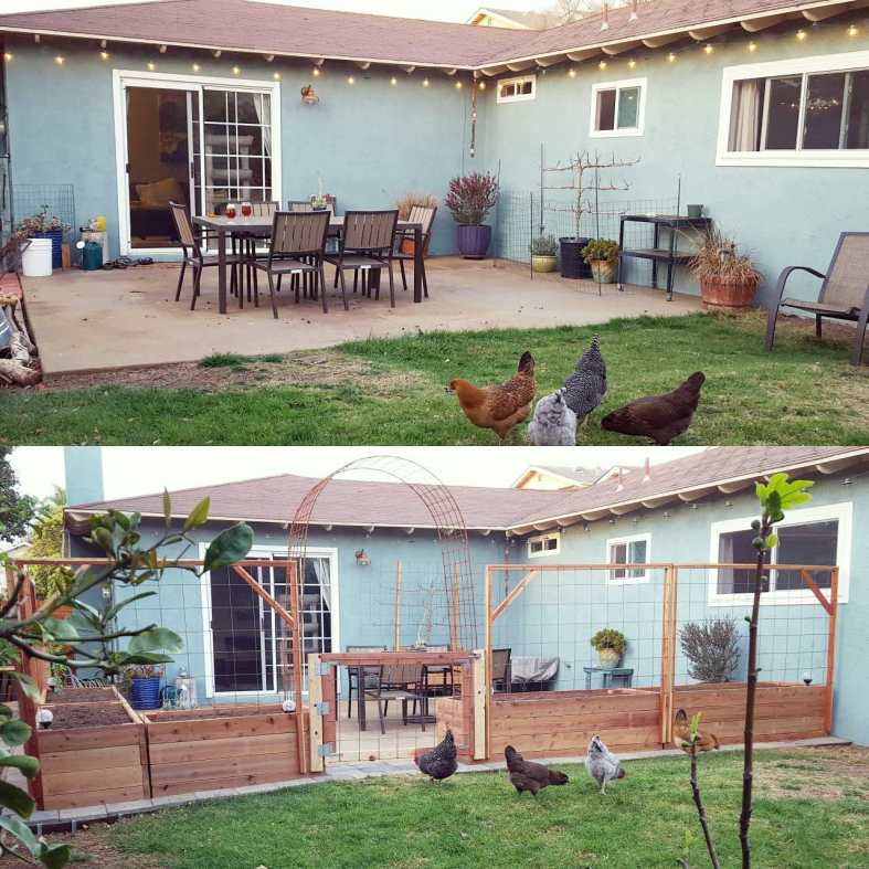 Top half : The back patio, not yet a garden, in fall 2014. The chickens sure did like hanging out under the table, pooping. Bottom half: Just after we finished enclosing the patio in early 2015. With raised garden beds, trellises and gates added to not only to create more space to grow food, but also exclude the chickens from this area. The patio garden is born!