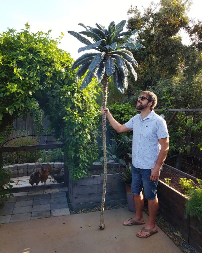 Aaron stands holding the homegrown kale tree we just cut down beside him, like a staff. It towers over him, almost 9 feet fall, looking more like a palm tree or kale umbrella than a kale plant. The backyard chickens are in the background, curious at what is going on.