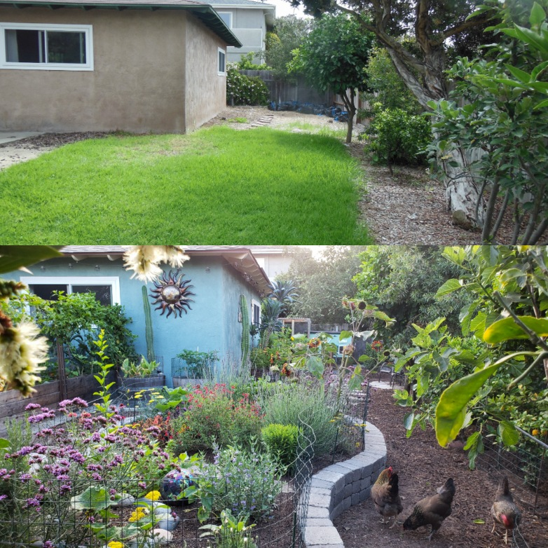 """Top half: August 2013, when we moved in. Bottom half: Summer 2018, a few months after the """"pollinator island"""" was built, and starting to fill in nicely! The fencing keeps the chickens out."""