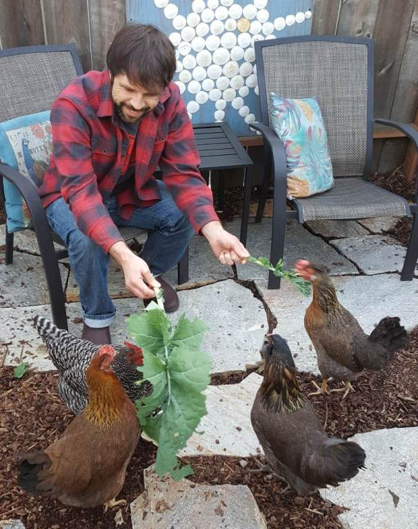 Aaron sits on a chair in the garden, leaning forward, holding out large leaves of greens for the four chickens around him to eat.