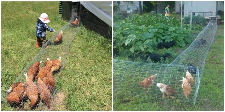 Chicken tunnels. They are short, round, wire tunnels around the yard that are large enough for a flock of chickens to enjoy, but blocks them from getting into the nearby garden