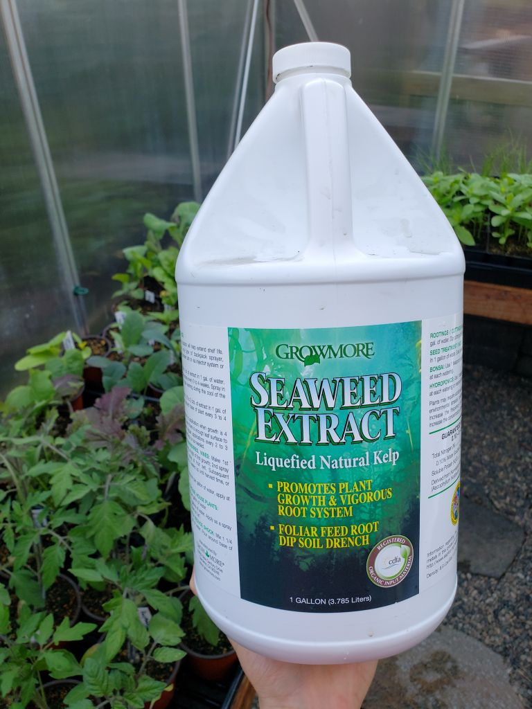 A hand holding a one gallon jug of seedling seaweed extract, in a greenhouse full of seedlings.