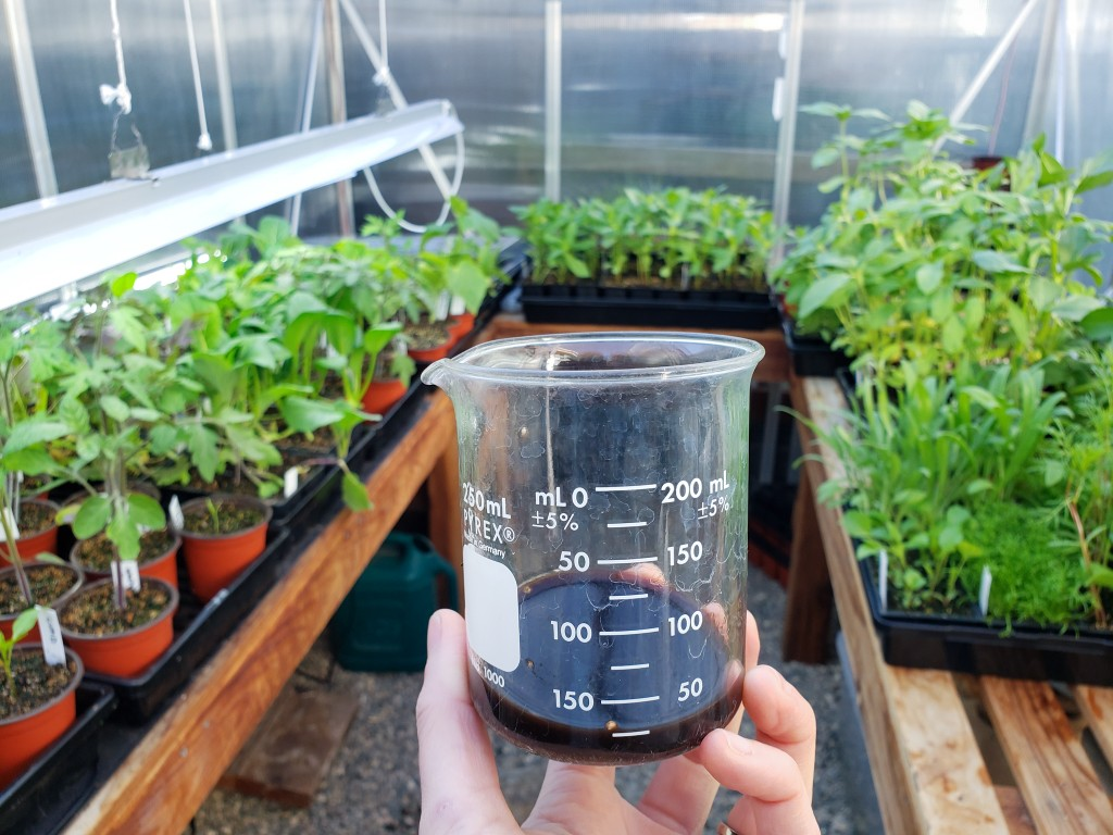 A hand holding a beaker of seaweed extract to feed to seedlings, shown in the background in trays in a greenhouse