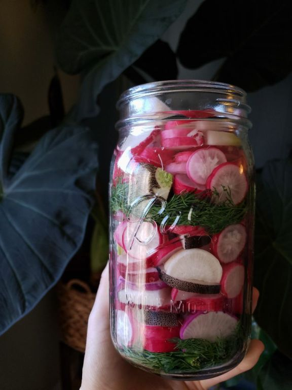 A hand holding a jar full of colorful garden radishes, packed very full, with dill and garlic too.