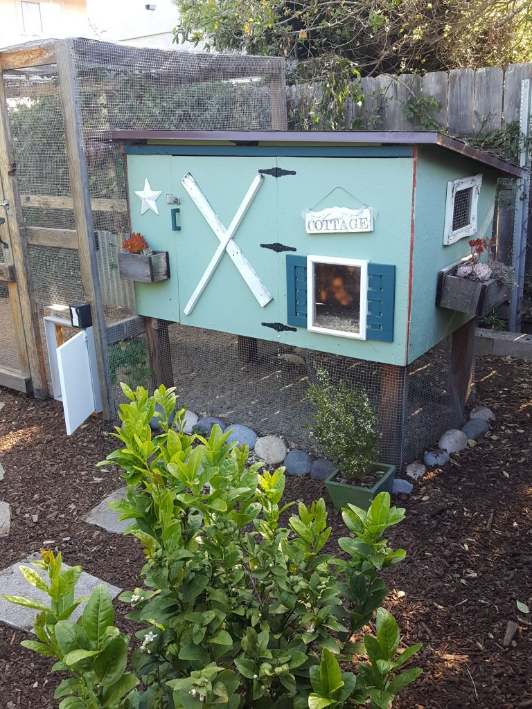 A cute chicken coop. It is about 5 feet wide, 5 feet tall, light blue with dark teal blue and white accents. It has little window frames, faux shutters, a window planter with succulents on the side. Large pastel color cobble stones are around its base.