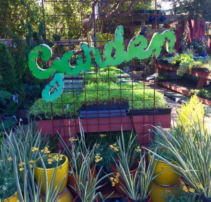 """One side of a rusted metal arch is shown with a metal sign attached across it with the word """"garden"""" in green cursive. There are various grasses or agaves in pots below the sign. Beyond are display tables with many herbs and perennials in smaller flats. A local nursery is a good place to find started seedlings that can help you in your search for fast growing crops."""
