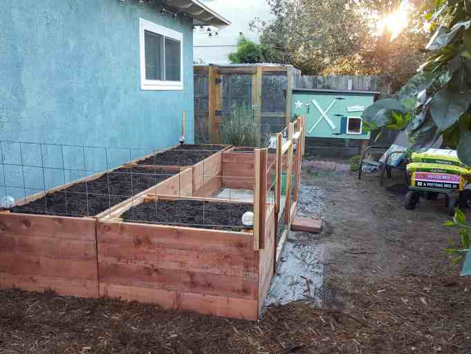 """The coop garden area with raised beds that are in the shape of a """"U"""" are shown. Landscape fabric is visible extending beyond the garden beds showing that the garden bed area should remain weed free. Mulch will be applied to the rest of the area in front of the beds next."""