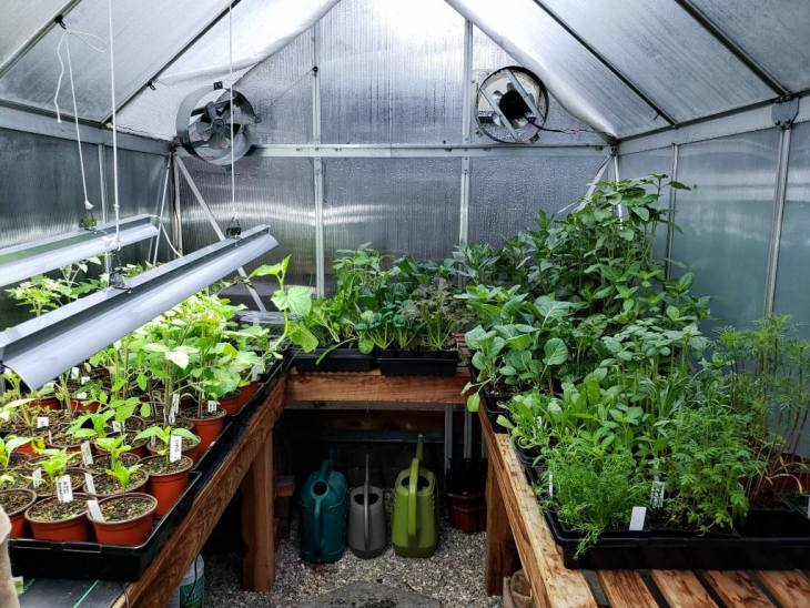 Looking inside a small 6x8 foot urban greenhouse. The wood shelves are lined with plants all around. On the left, some of the seedlings are still on top of heat mats and under grow lights. On the right, the seedlings are moved away from the artificial heat and light in preparation to be planted outside, as part of the hardening off process.