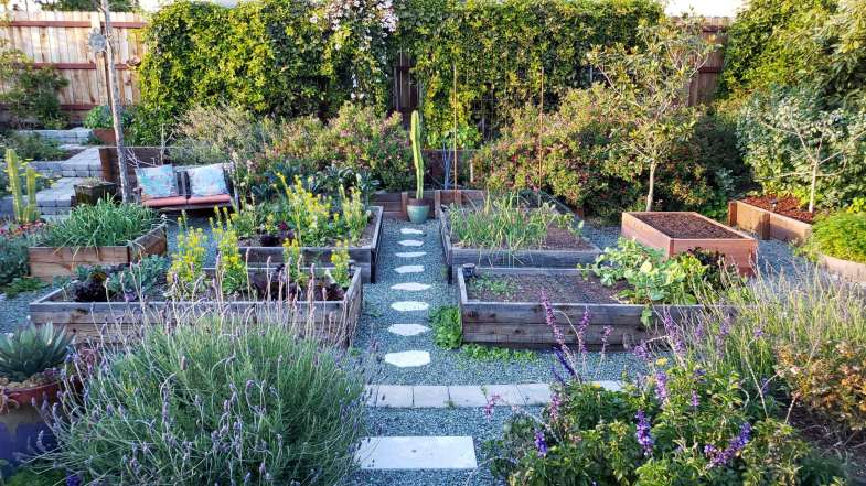 A front yard garden with 6 raised wood garden beds of various sizes. The ground is covered in small blue-green gravel, with stepping stone pathways between the beds. Flowers, shrubs, vines, and potted plants surround the perimeter of the raised bed area.