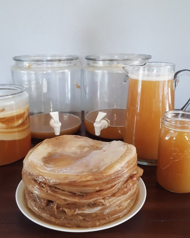 This photo was taken on crock-cleaning day. It shows two nearly empty kombucha crocks, each glass and 2 gallons in size. Next to them sits a plate piled high with SCOBY, and various pitchers and containers of finished kombucha.