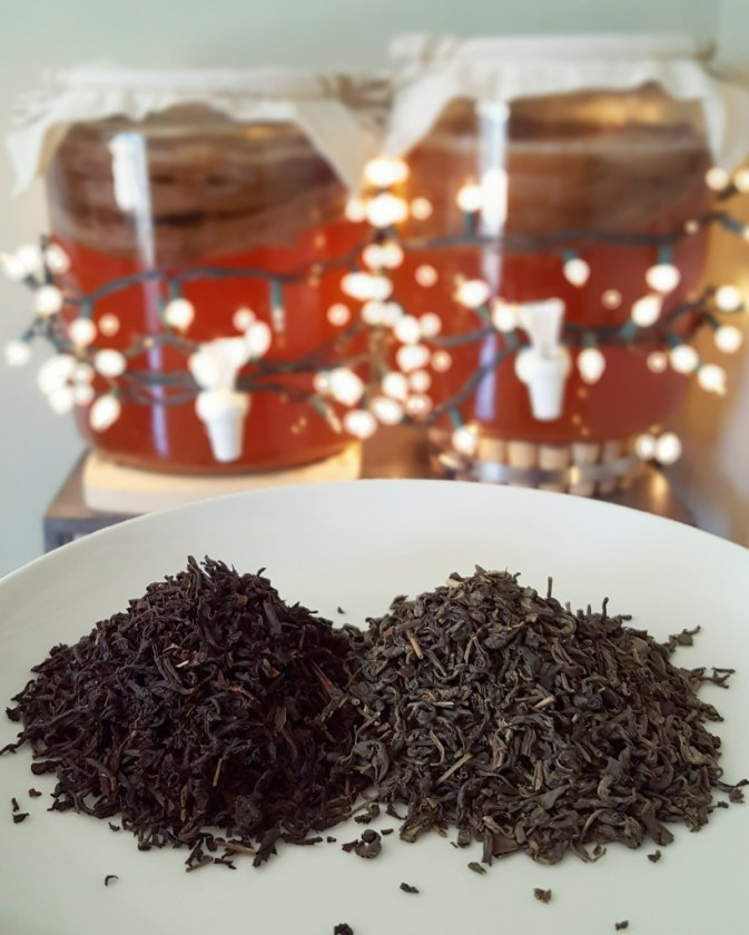 A close of image of two piles of loose leaf tea on the same plate. One is black, and one is more grey green in color. In the back ground are two large kombucha brewing vessels. They're glass, not in focus, but glowing with christmas lights and red colored kombucha inside.