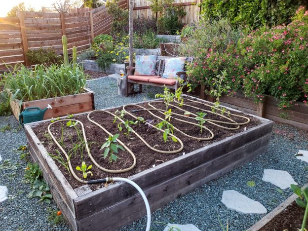 A wood raised bed is shown after it has been planted out with you summer seedlings. There is a 50 foot soaker hose that has been evenly snaked across the surface of the garden bed. There are various perennial plants, shrubs, garlic, and vines in and around the raised garden bed.