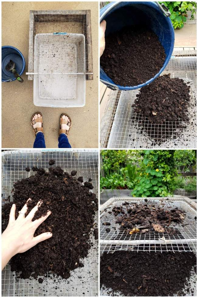 A four part image collage, the first image shows two feet standing next to a small bucket, trowel, bin, and a wood frame box with hardware cloth attached to one side of it. The second image shows a blue bucket of vermicompost being dupled onto the wire cloth with a bin sitting below the wire to catch the screen worm compost. The third image shows a hand working the castings back and forth to sift the vermicompost from the vegetable waste that still remains. The fourth image shows the larger vegetable material sitting on top of the   hardware cloth as it wouldn't fit through the wire mesh while the worm castings have been sifted through the metal cloth and now reside in the plastic catchment bin below. That is how one harvests worm castings after the worms have made compost for you.