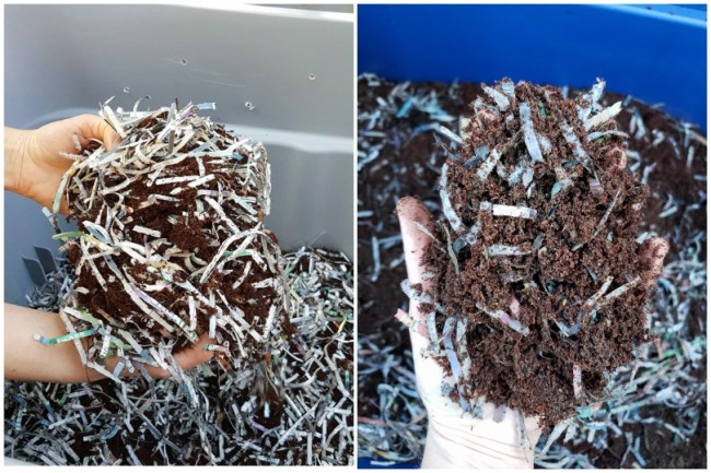 """Two images, both of hands holding """"bedding"""" material over a worm bin. The bedding is a combination of coco coir and shredded newspaper."""