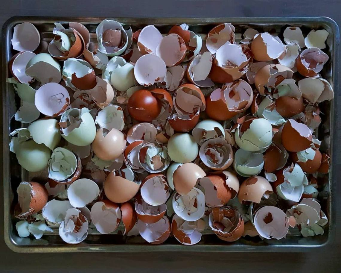 Egg Shell for Poultry Feeds