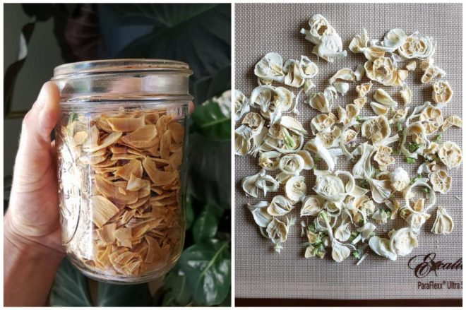 The dried garlic slices are displayed in a two way photo collage, one photo displays the now-yellow and crips dried garlic in a pint sized glass mason jar and the other photo displays different dried garlic on the drying rack, ready to be ground.