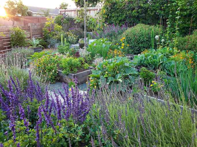 An image of a garden, with raised beds, vegetables, and flowers all around.