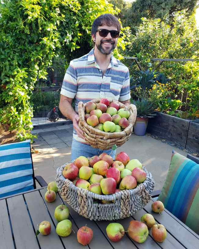 A man wearing a button up t  shirt and light blue jeans standing in a back patio garden holding a basket of freshly harvested apples. There is another basket full of apples immediately in front of him sitting on a table. The patio is surrounded with raised wooden garden beds filled with kale and lettuce, there are various vines, and trees outside of the patio that makes for a very green and wooded background.