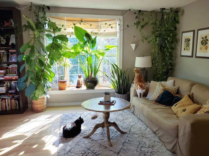 A room in a house that is centered with a bay window. There are houseplants sitting in and around the bay window, enjoying the suns rays that are shining in. There is a huge hanging pothos plant in the corner and there are also three cats dispersed evenly throughout the room, not paying much attention to any of the plants.