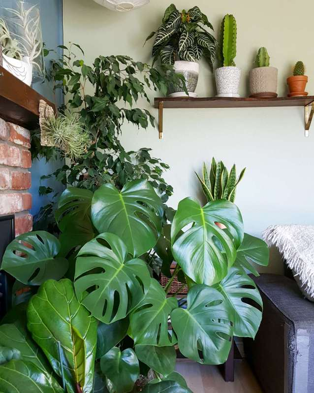 A corner of a house that has houseplants displayed on various levels. Some are on the ground, some are on side tables, and others are on higher shelving units and fireplace mantle.