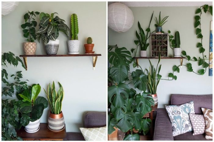 A two photo collage showing the corner of a house with various types of indoor houseplants and sizes. A shelf is displayed on the wall with little plants here and there while there are bigger plants on side tables and stands. They range in type from rigid leaves to hanging plants, cacti, etc.