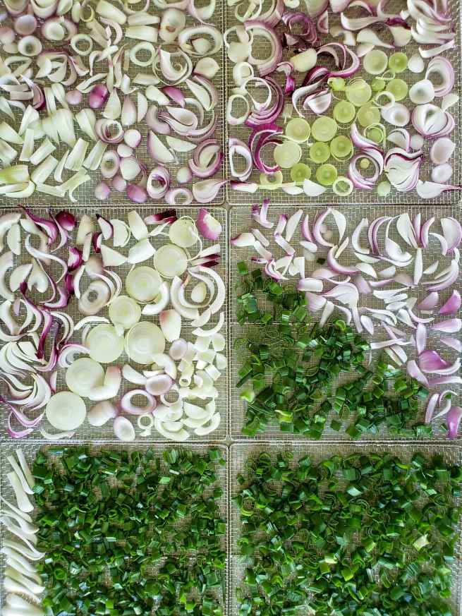 An image showing six stainless steel dehydrator racks single stacked two wide and three down packed full of freshly slice onion bulbs and onion greens. The onions are fairly evenly spaced so they are not on top of each other and the cuts vary between slices and rounds. The top and middle portion of the image contains mostly the red and white onion slices while the bottom third is mostly made up of the onion greens (from the stalks).